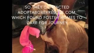Tearjerker: Sweet Rescued Boxer Dog, Journey