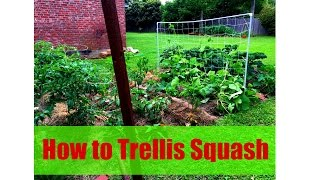 How To Trellis Squash - Step By Step Instructions