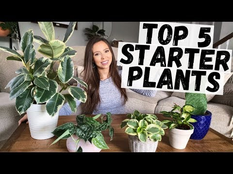 easiest-houseplants-for-beginners- -my-top-5-easiest-houseplants-to-care-for