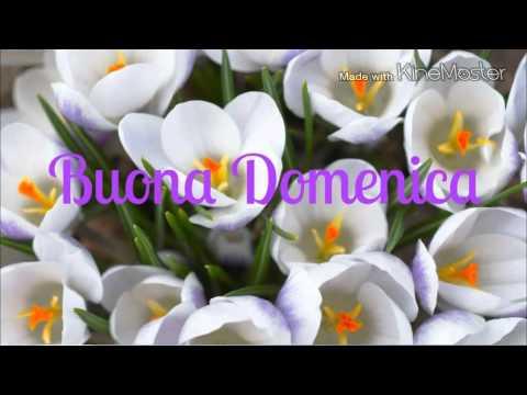 DOMENICA 15 MAGGIO Hqdefault