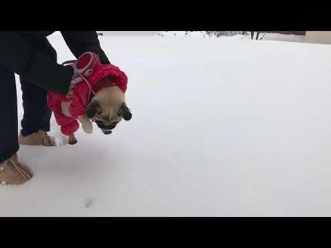 初めての雪でエア犬かき披露