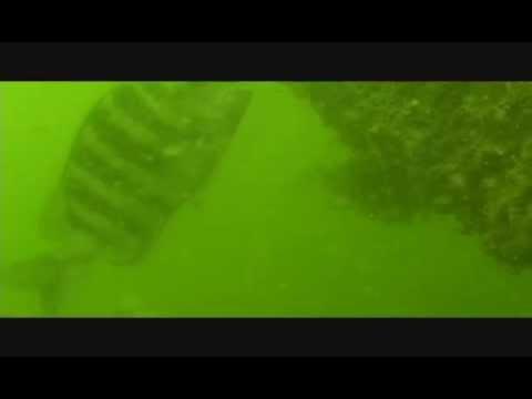 Bahia Beach Reef Sheepshead Tampa Bay Artificial Reefs