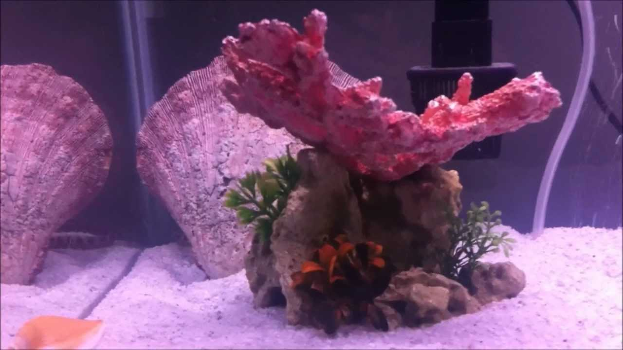 How to start a saltwater tank from start to finish doovi for How to start a saltwater fish tank
