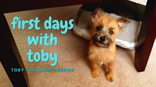First Days with New Puppy | Toby the Cairn Terrier