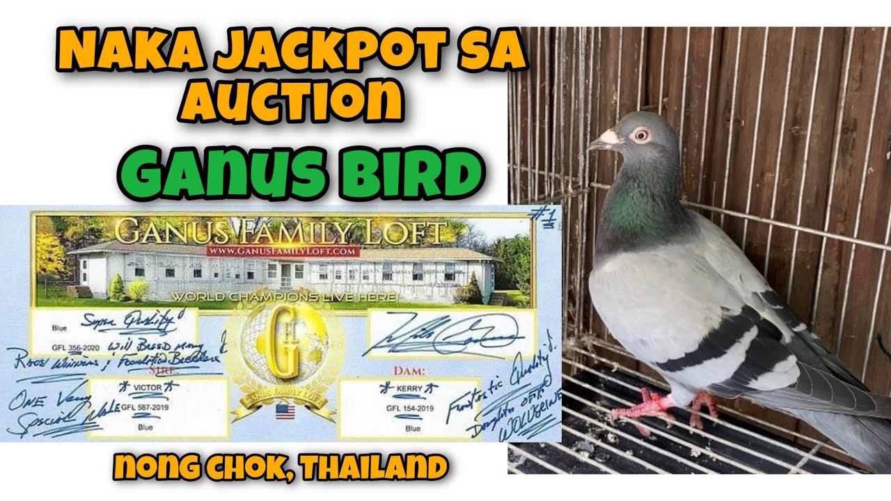 NAKA JACKPOT SA AUCTION SA NONG CHOK THAILAND NG GANUS BIRD  Reggie Cruz Loft & Aviary #racingpigeon