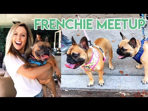 FRENCHIE MEETUP IN HOLLYWOOD HILLS