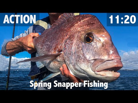 Spring Snapper Fishing