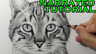 How to Draw a Cat [Narrated Step-by-Step Tutorial] thumbnail