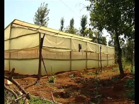 low cost greenhouse farming youtube