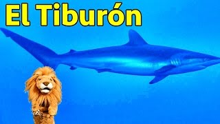 Los niños conocen al Tiburón - Animales del Acuario con Lorenzoo - Videos Educativos para Niños thumbnail