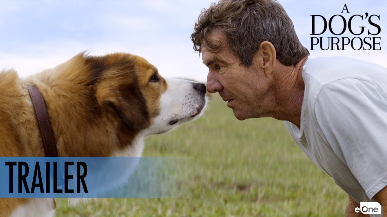 Where Can I Buy The Movie A Dog S Purpose