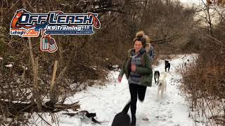 Easton Dog Trainers: Off Leash K9 Training ||| What do our do trainers do on their days off?