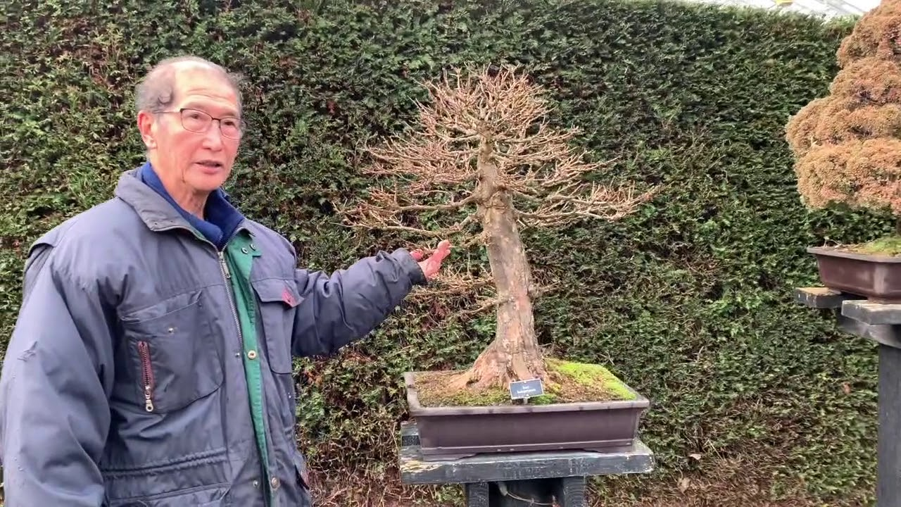 Bonsai Forests And Groups Youtube