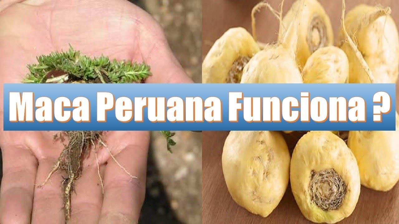 maca peruana capsula pra que serve