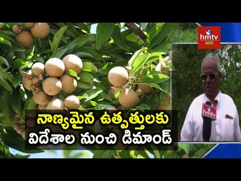 Zero Budet Natural Farming | Success Story of Multiple Cropping | hmtv Agri