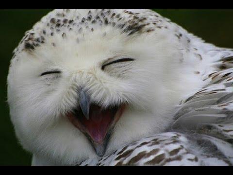 Download 88  Gambar Burung Hantu Yg Lucu HD Paling Unik