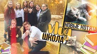 VLOG: Новые котята // Опять школа