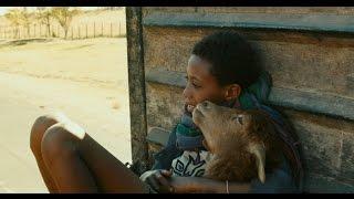 Trailer Lamb, Ethiopia