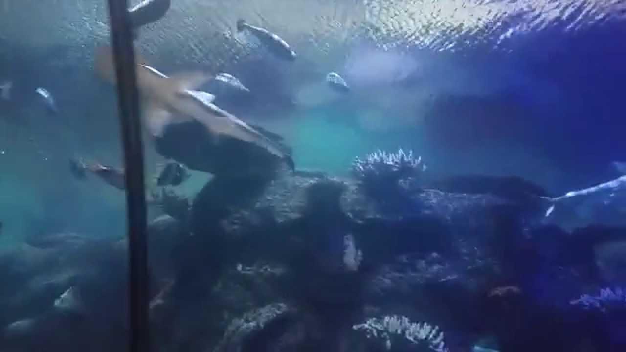 Shark Reef Exhibit @ Mandalay Bay Las Vegas November 2014 ...