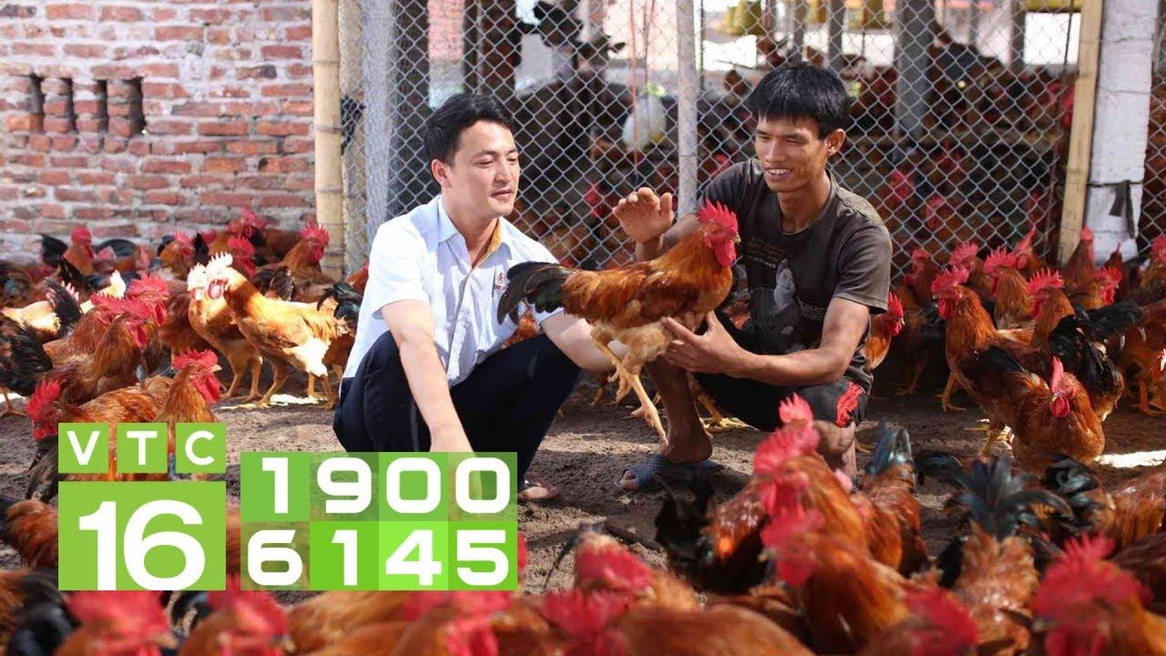 Trị bệnh Newcastle ghép CRD cho gà có khó? I VTC16