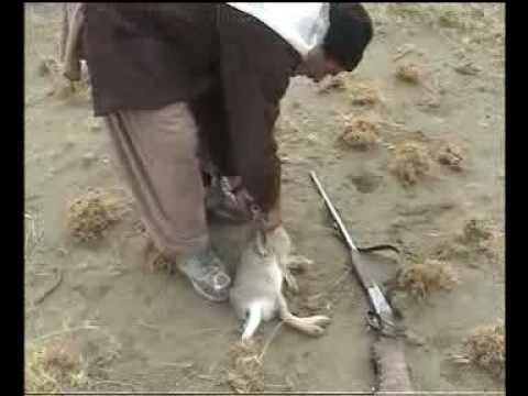 hunting rabbits da soyano shekar (zhob) pashton pukhton