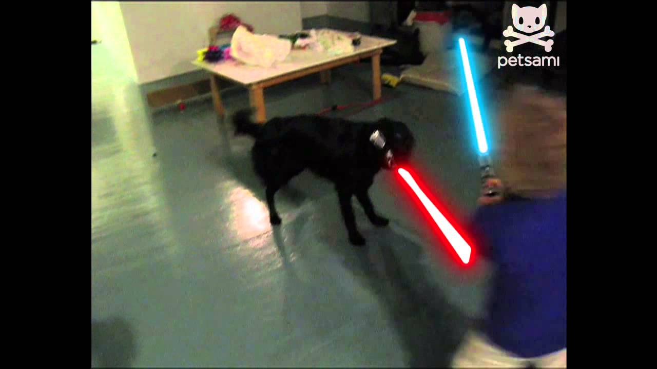 Funny Animals Fighting With Lightsabers