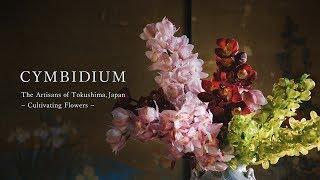 JAPANESE  CYMBIDIUM 徳島のシンビジウム農家の業