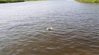 Рыбалка на окуня Река Танью Озеро Варчаты