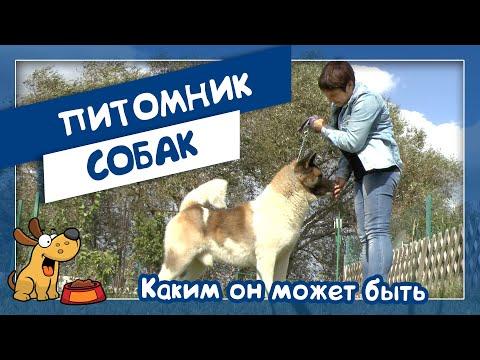 Питомник собак: каким он может быть (Маргарита Черемушкина и американские акиты)