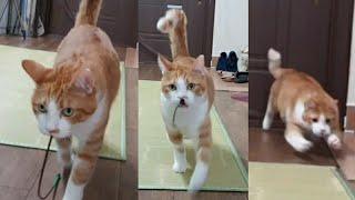 막대기 신나게 물어오는 고양이, 냥냥이의 창 찌르기 놀이ㅋㅋㅋ