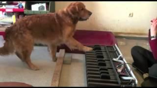 Talented Dog