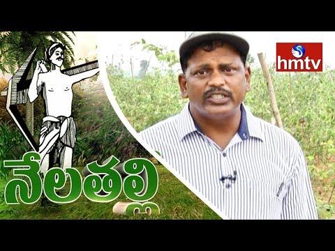 Apple Ber Cultivation Information Guide By Inspirational Farmer |  Khammam | Nela Talli | HMTV