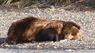 Trippin' HotHands Bear 2