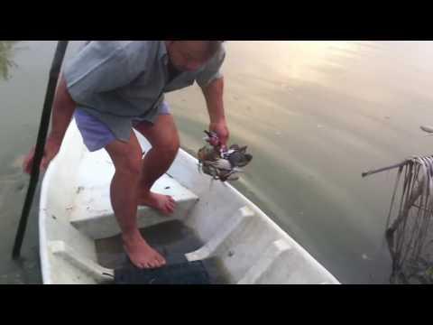 bắt cua - câu cua