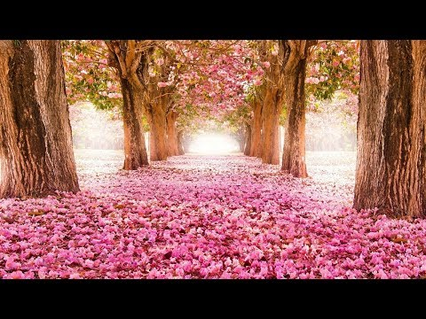 Top 40 Prettiest Flowers Wallpapers, Flower Delivery, Beautiful Flowers Destop Wallpapers 2018