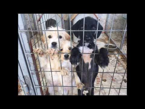 Dog Rescue Cyprus 2016