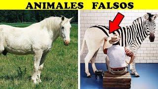 7 Oscuros SECRETOS  que los Zoológicos no quieren que sepas