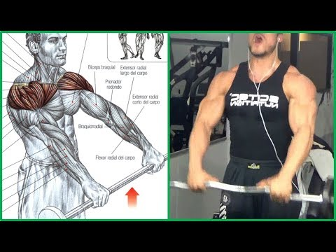 8 Shoulders Workout,  8 Ejercicios Para Hombros   Fitness Body