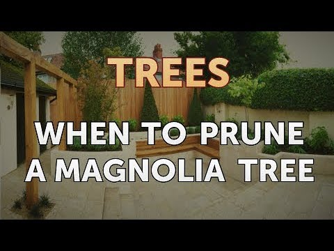 When To Prune A Magnolia Tree Youtube