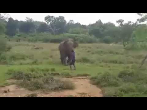 Super Martinez - Elefante Mata a Hombre que Intentaba Hipnotizar