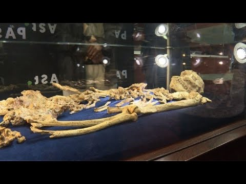 South African 'Little Foot' fossil unveiled
