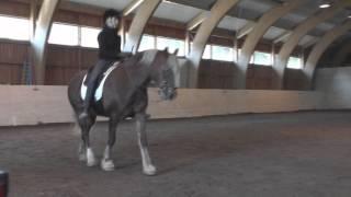 Kurs i akademisk ridekunst med Michelle Wolf