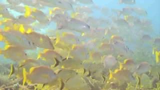 カンクンファンダイブ(Dive In Cancun)