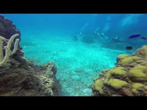 2015 Cozumel with Ocean Sport February 01