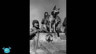 15 шокирующих фактов о Великой Отечественной войне, от которых волосы встают дыбом!