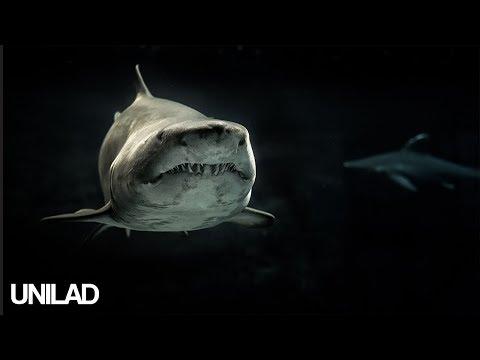 Nightmare Fish! | UNILAD