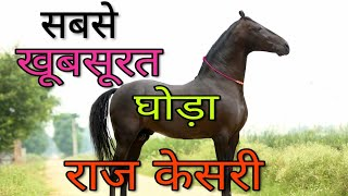 10 करोड़ का घोड़ा, Raj Kesri सबसे सुन्दर घोड़ा Most beautiful Horse of India   Marwadi Breed   Pushkar