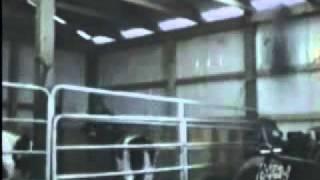Funny animals sex - FCF videos
