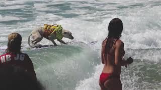 Sugar-the-surfing-dog. 2018 Surf City Surf Dog Finals (2)