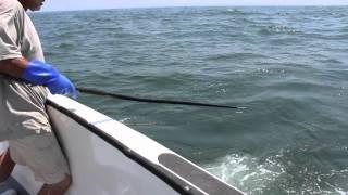 Fishing in Montauk on Sea Wife 4 7/17/12